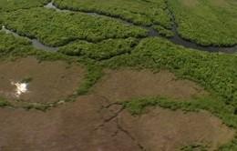 Everglades Reel