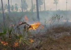 Eveglades Boy Scout Fire