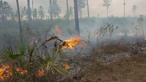 Everglades Boy Scout Fire