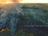 River of Grass Prescribed Fire