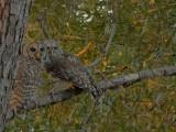 Owl Spot